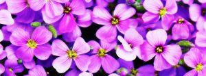 Adhara Flowers